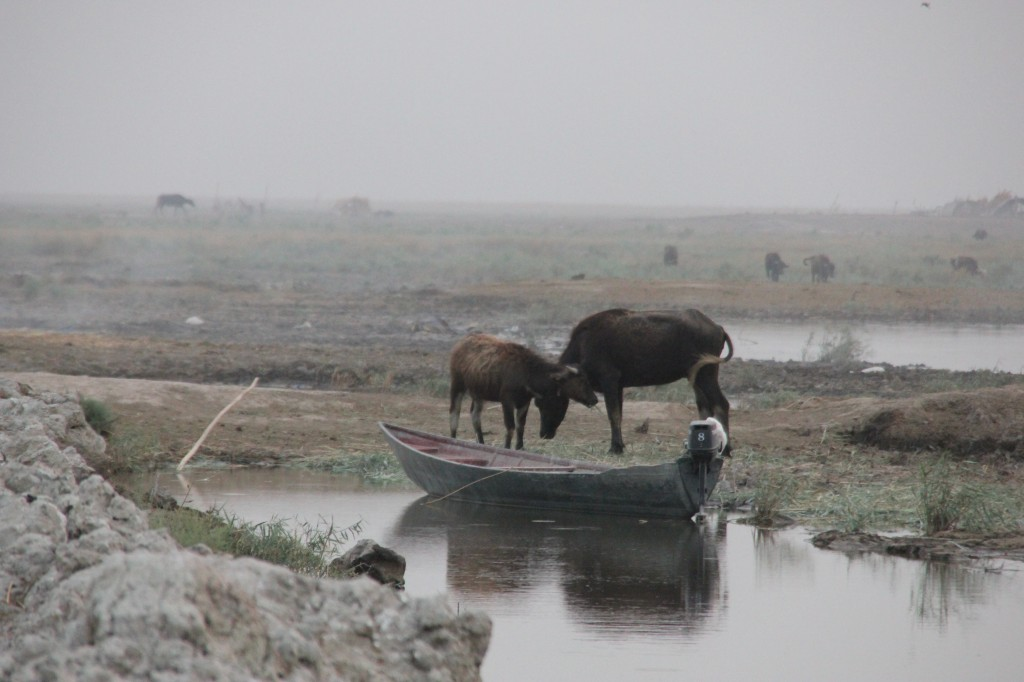 socio economic and environmental impacts of land Socio-economic and environmental impacts of participatory watershed management programme: a case study of sundarwadi watershed in maharashtra.