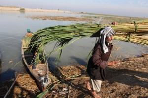 Reuters , Marshes- south Iraq