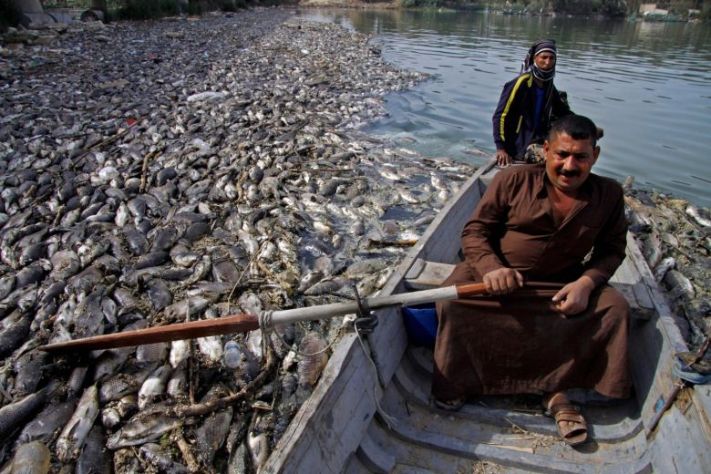 Mystery Over Thousands of Dead Carp in Euphrates River