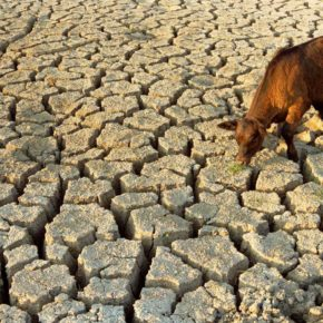Al Diwaniyah Forum Works to Resolve the Water Scarcity Crisis in Al-Badeer